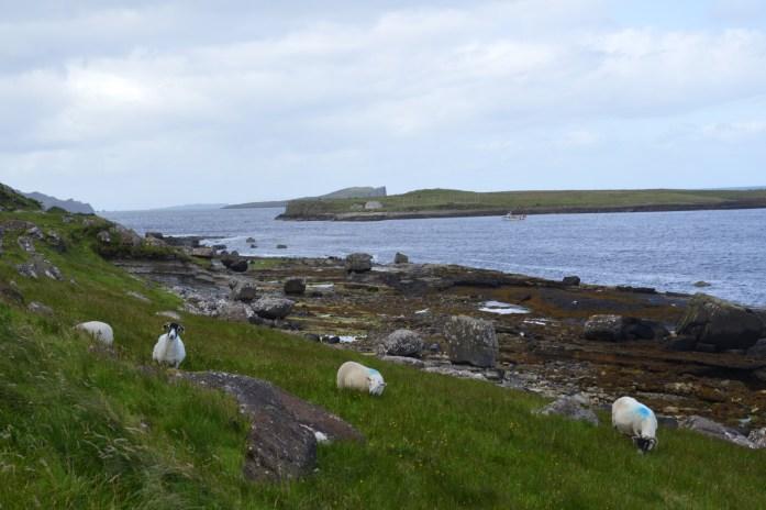 Sheep, Isle of Skye, Scotland