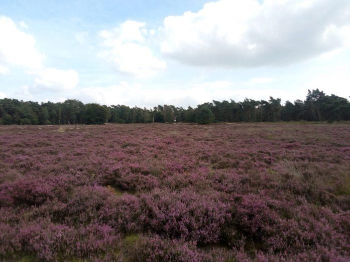 Nationaal Park De Hoge Veluwe, the Netherlands