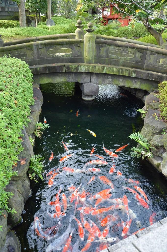 Fish at Sensoji temple in Tokyo, Japan