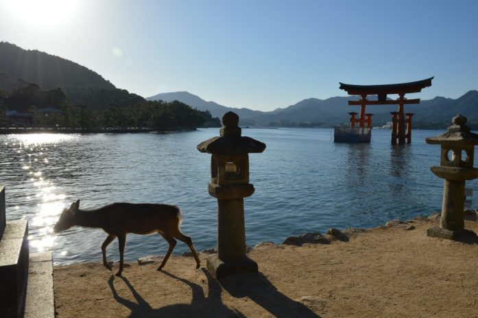 Deer and Itsukushima Shrine at sunset, Miyajima, Japan