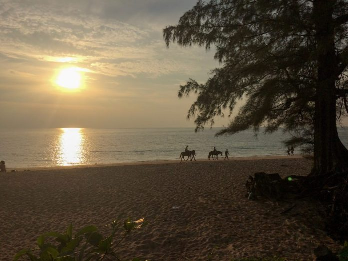 Horses on the beach on Ko Lanta, Thailand