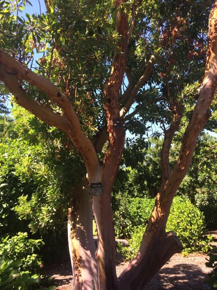 Botanic Garden, Adelaide, Australia