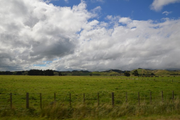 Driving from Taradale to Martinborough, New Zealand