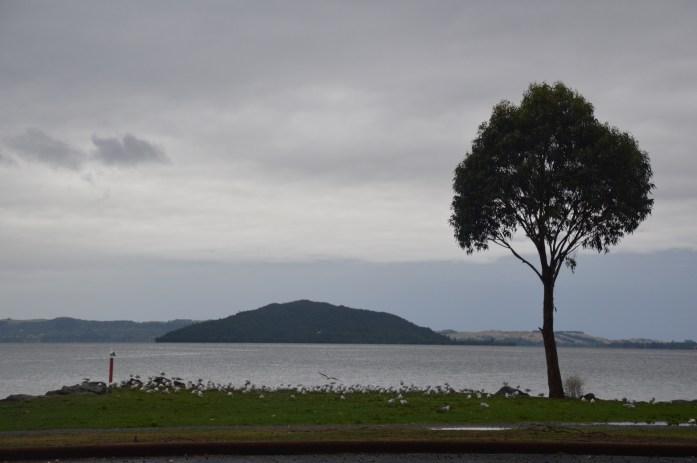 Te Ruapeka Bay, Rotorua, New Zealand
