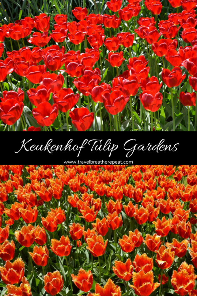 Pictures to inspire you to see tulips at Keukenhof Gardens in the Netherlands plus tips for your visit