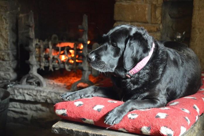 Dog, Tan Hill Inn, North Yorkshire, UK