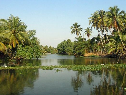 Palm trees In Kerala Backwaters India