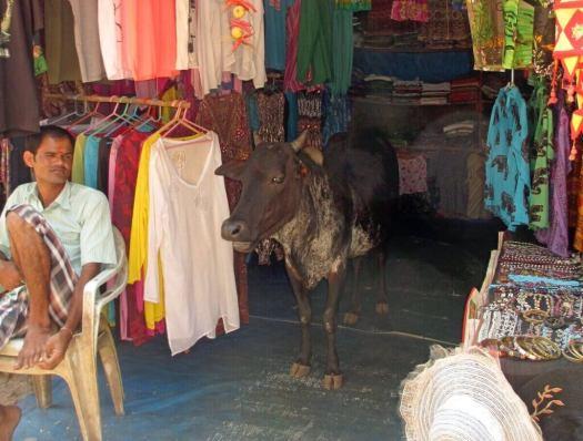 India-Goa-cow-in-shop