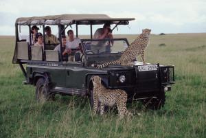 f721eb_Safari_Cheetahs