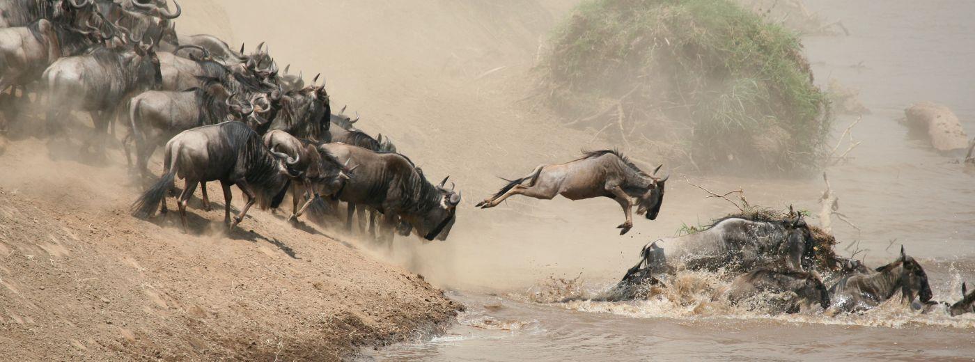 Victoria Falls Live Wallpaper The Great Migration Kenya Masai Mara Mara River