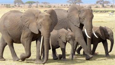 Afryka dzika kusi hunterów