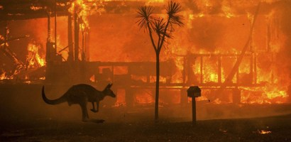 Cicha śmierć. Na ratunek misiom koala!