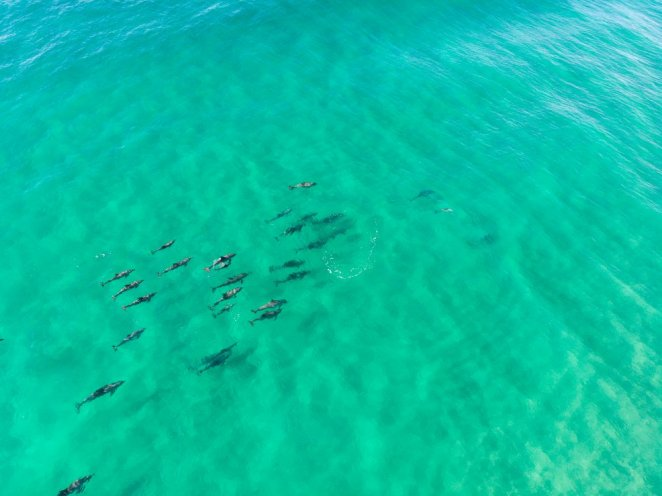 Tallebudgera Creek Sharks