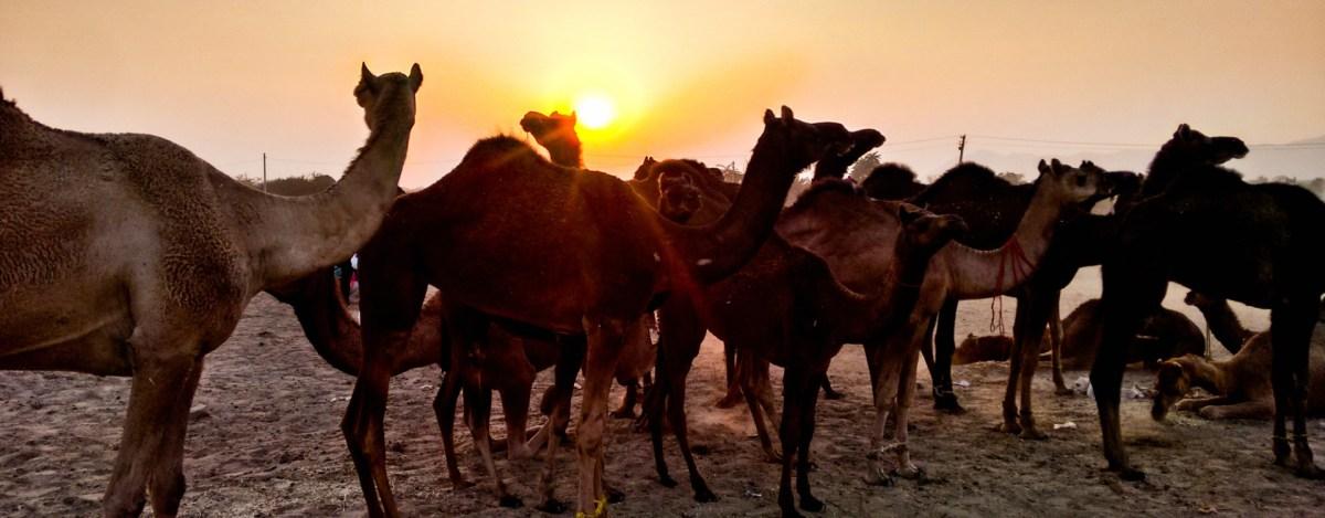 My Jaisalmer Diary