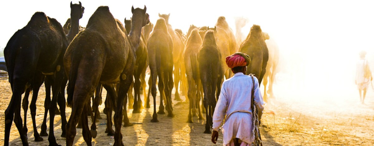 Pushkar Fair: A Colourful Carnival