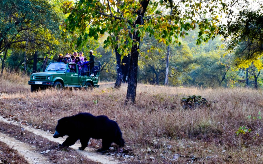 Into The Wild: Satpura National Park