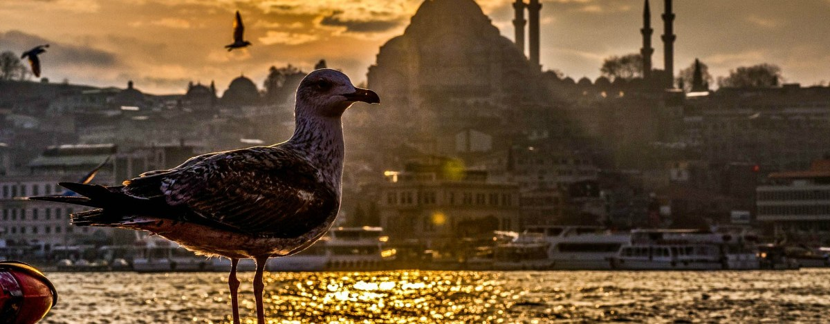 Traveling to Turkey ? Find Out Top Things To Do In Istanbul