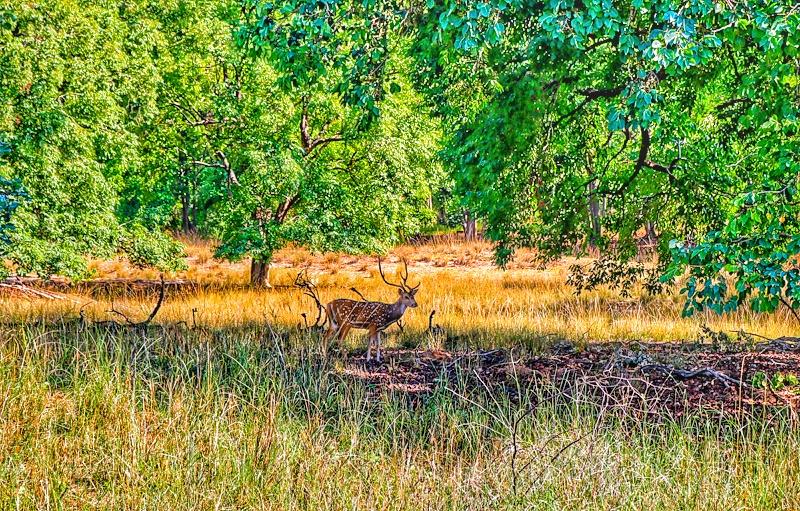 Taj Safaris Banjaar Tola & Kanha National Park, Madhya Pradesh