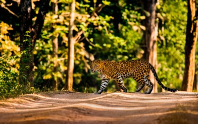 An Exceptional Safari Experience in Kanha National Park With Pugdundee Safaris