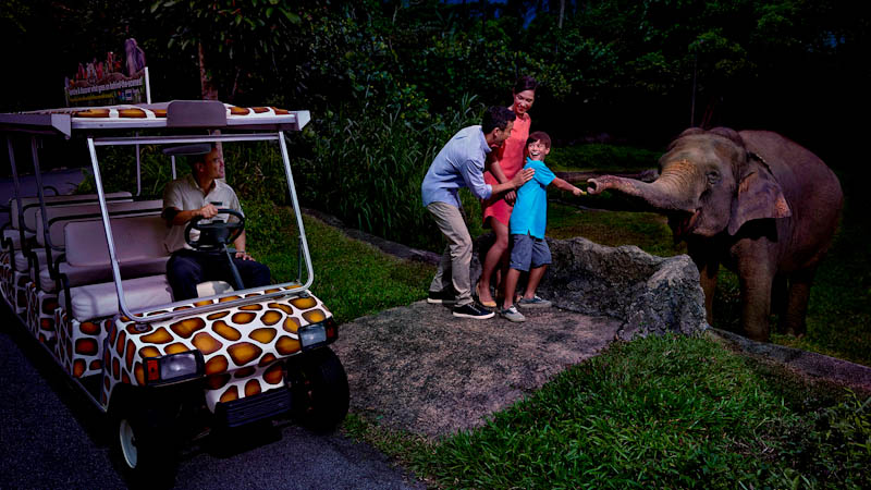 Singapore Night Safari: Everything You Wanted To Know & Practical Tips