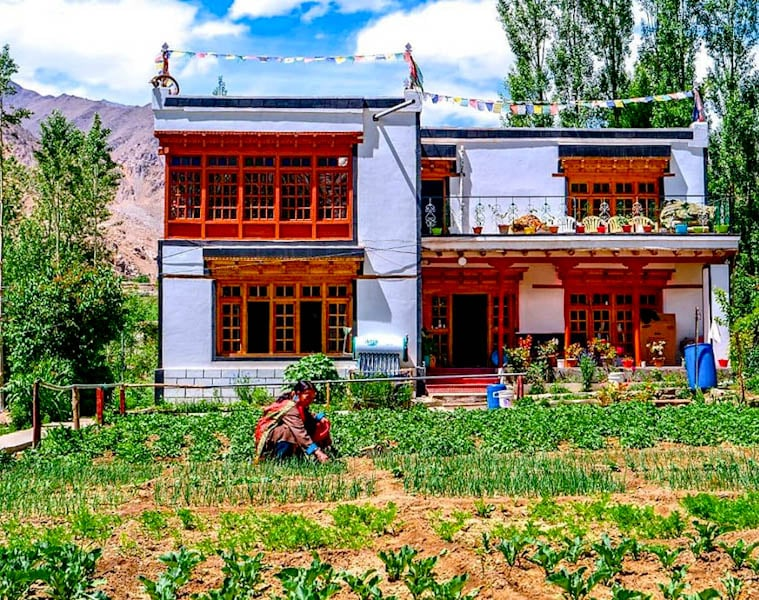 Why I Chose Himalayan Farmstays in Phyang Village in Ladakh: Find Out