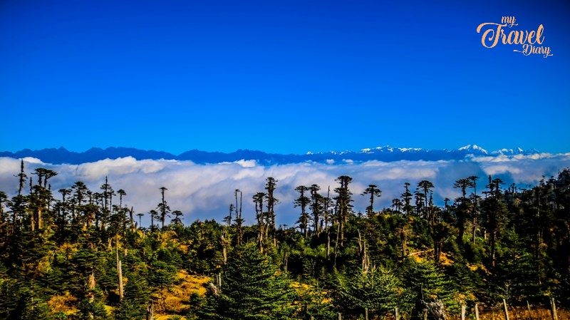 The Himalayan range and the dense forest make a captivating frame