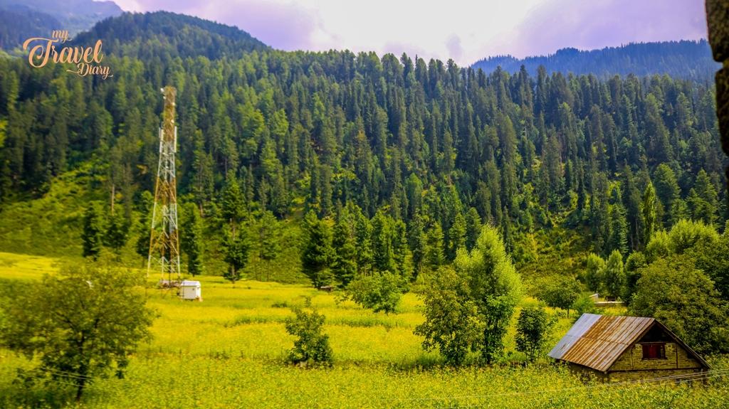 The Cornfield in Kullan village, Sonamarg, Kashmir