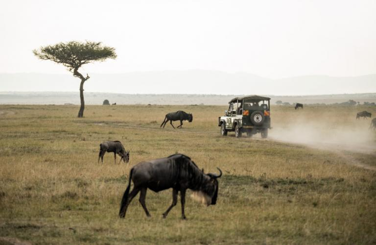 Nairobi National Park: The Only National Park in a Town