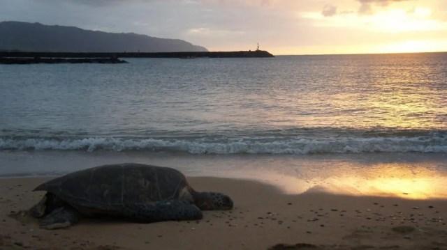 Turtle Beach in Oahu