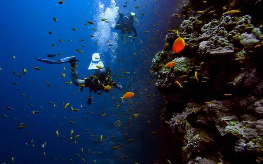 Scuba diving in Koh Tao, Thailand