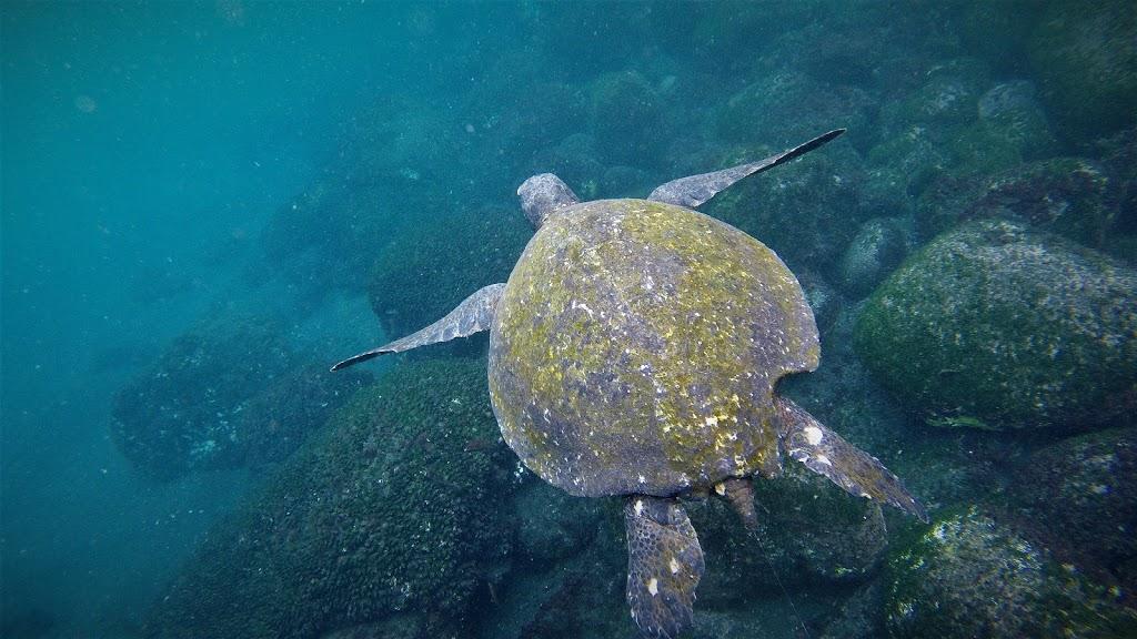 唾手可及的海龜