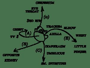 heart_pathways