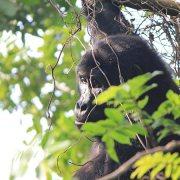 Birding and Gorilla Trekking tour