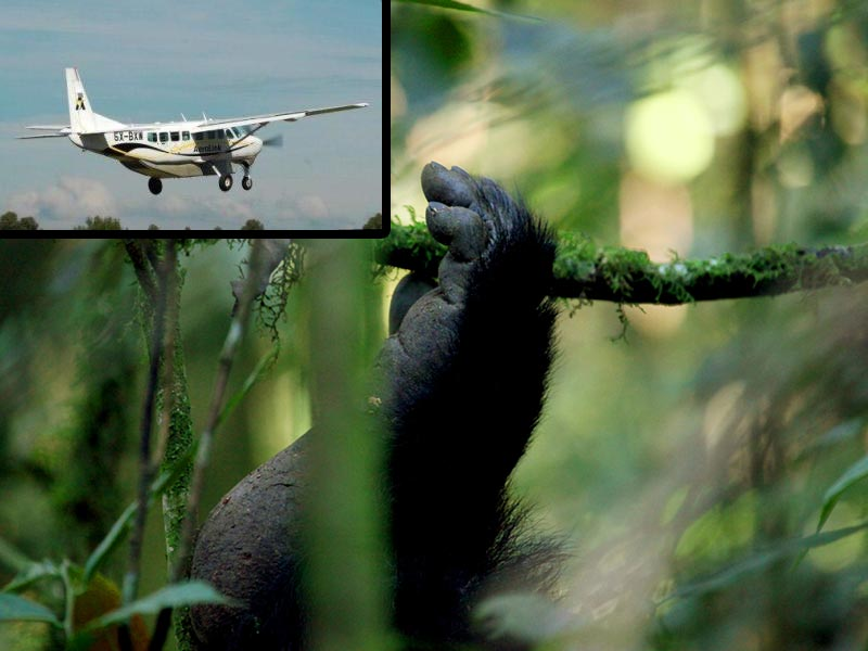Fly to Bwindi Gorilla Trekking Safari Tour