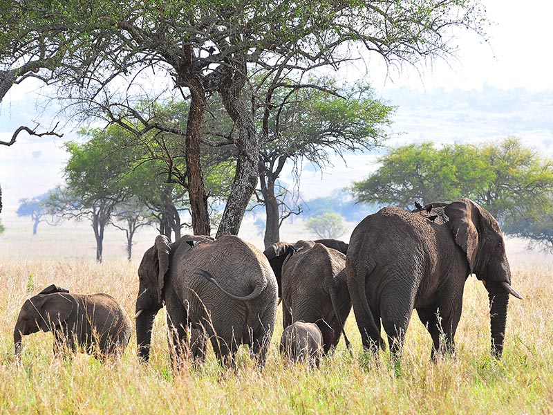 Fly to kidepo Valley National Park Tour