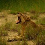 Queen Elizabeth National Park Safari