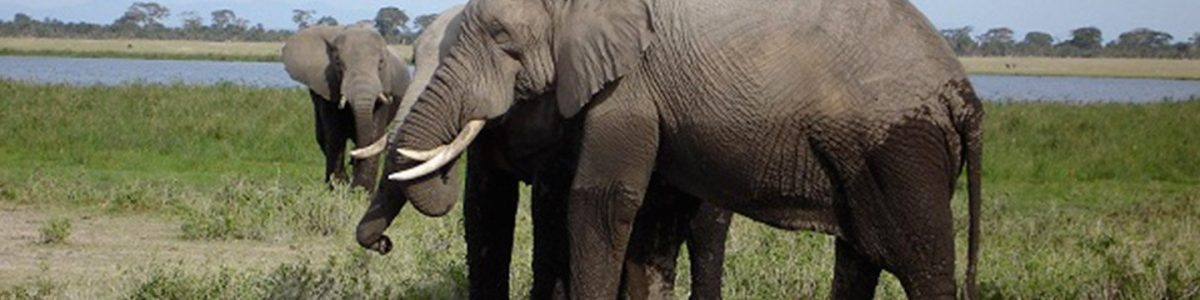 Kenya Wildlife Weekend tour - Amboseli National Park Safari