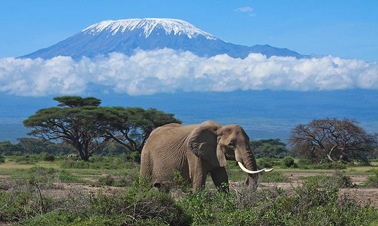 Kenya Wildlife Weekend tour - Amboseli National Park Tour