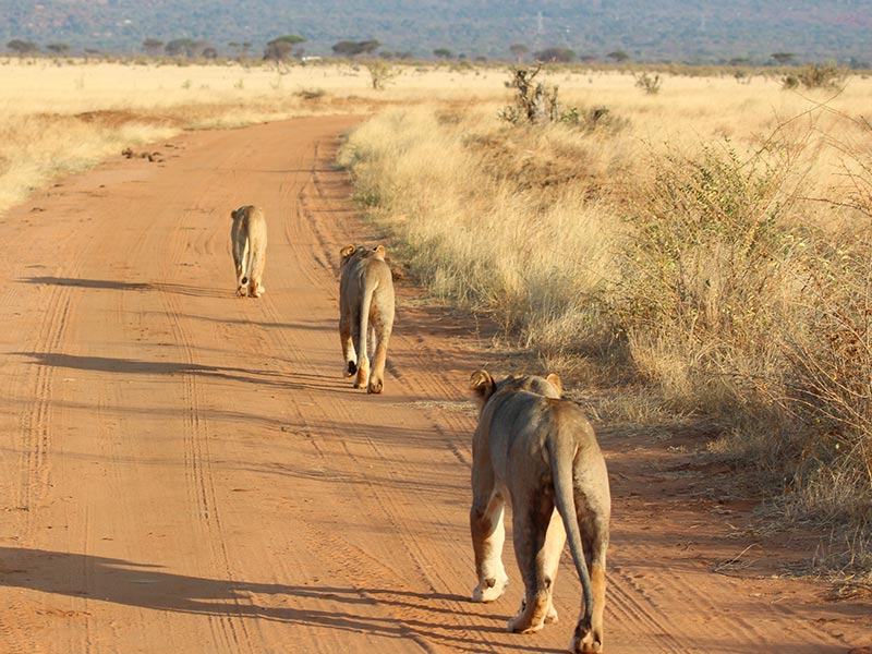 Tsavo West National