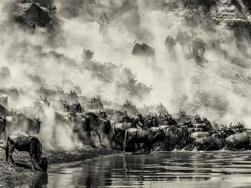 10 DAYS KENYA GREAT MIGRATION TOUR