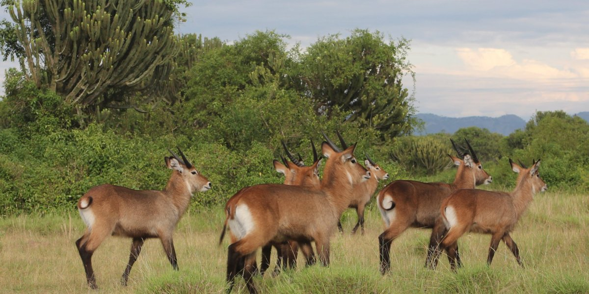 what to do in queen elizabeth national park