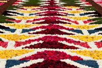 Travelettes   Brussels flower carpet