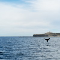 Wondrous wildlife in Puerto Madryn; Rose Palmer; Travelettes