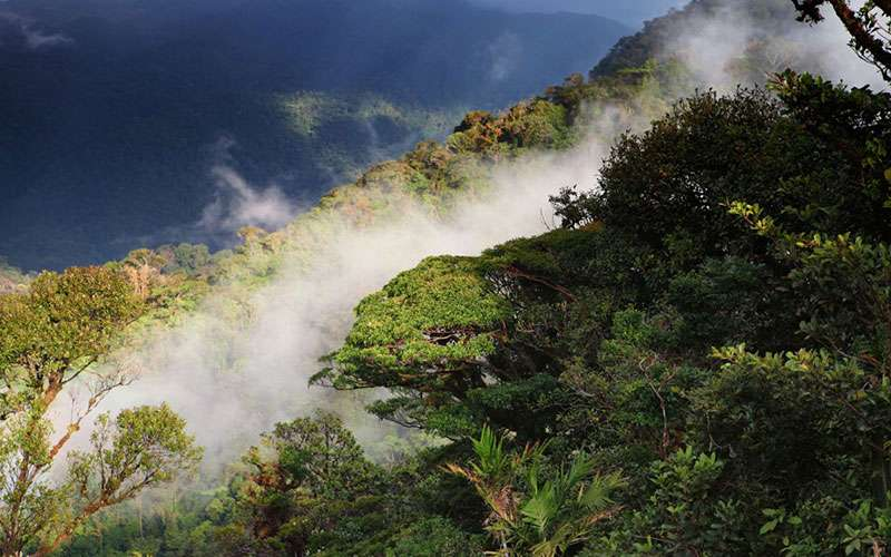 Monteverde Cloud Forest is an amazing cloud forest that has been named several times as one of the most beautiful forests of the world.