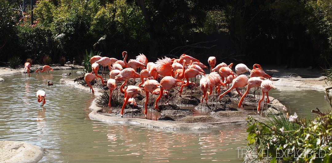 San Diego Zoo - Flamingos