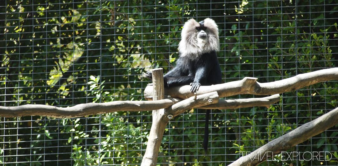 San Diego Zoo - Monkey