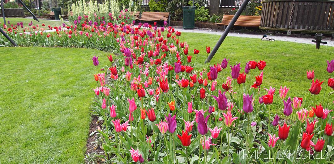 Copenhagen - Tivoli Gardens Tulips