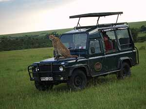 cheetah on bonnet 001 copy