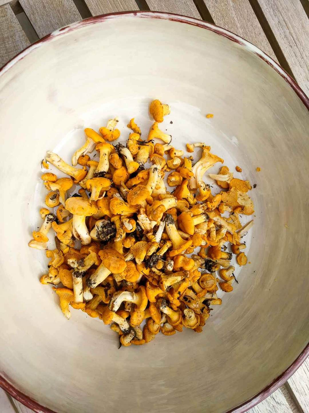 chanterelle mushrooms foraged in the forest in Finland