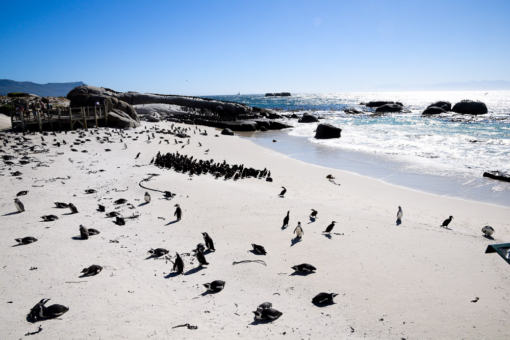 sand beach with penguins